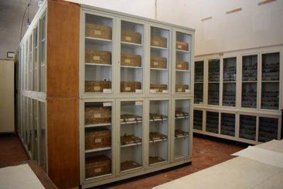 herbarium-case-study-FST